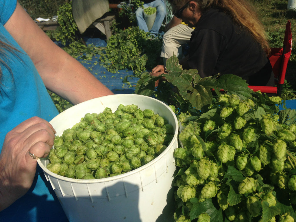 Hello September! Festivals, hops harvest and farmwork
