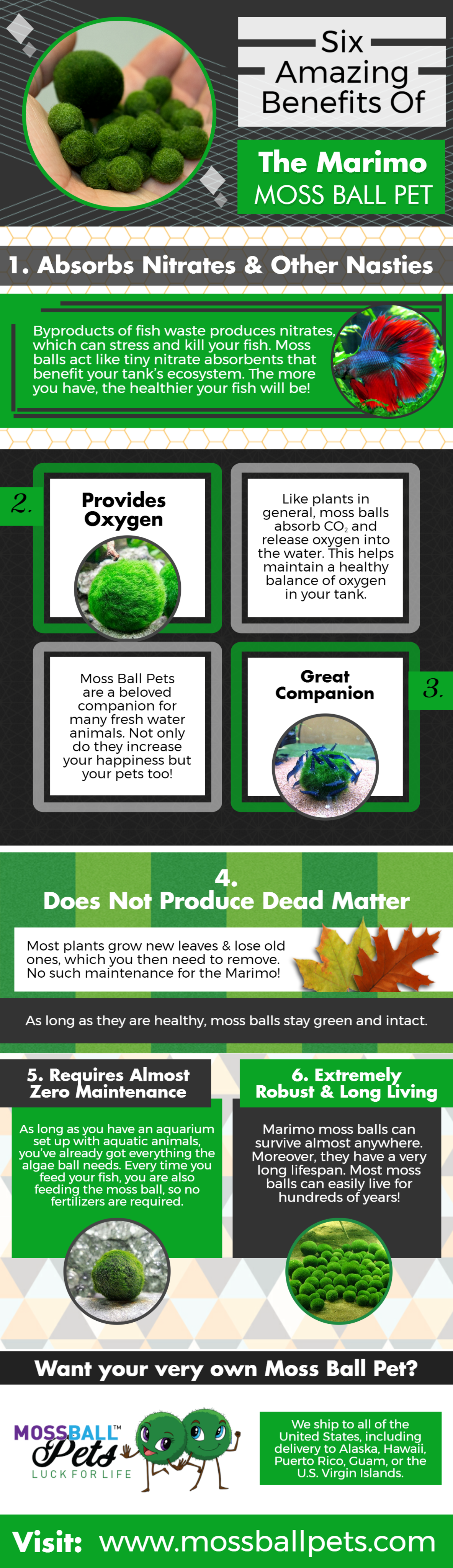 Six Amazing Benefits Of The Marimo Moss Ball Pet