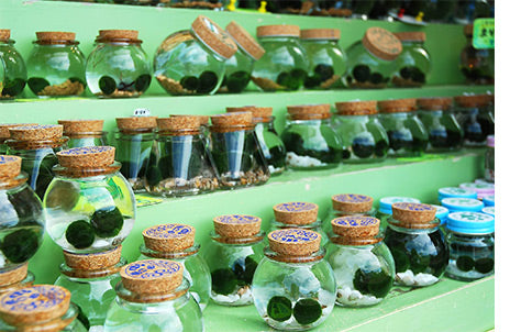 Marimo in Glass Jars for Sale in Japan