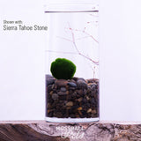 Glass Cylinder Terrarium Starter Kit with Junior Moss Ball Pet™