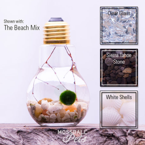 Light Bulb Glass Bottle Terrarium Starter Kit with Nano Moss Ball Pet™