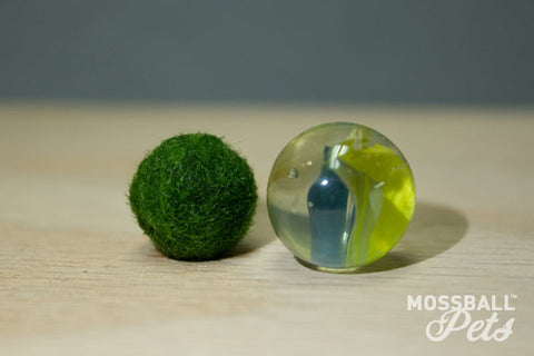Nano Moss Ball Pet™ (2 to 3 Years of Age)