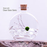 Round Glass Bottle Terrarium Starter Kit with Nano Moss Ball Pet™