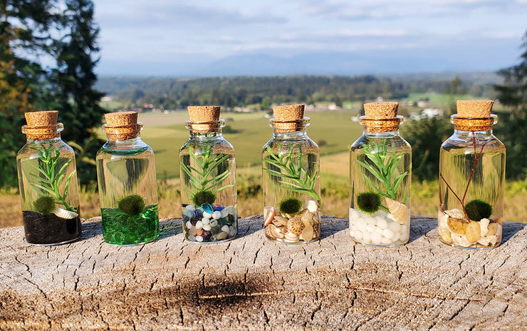 Small Alchemist Terrarium Starter Kit with Baby Moss Ball Pet