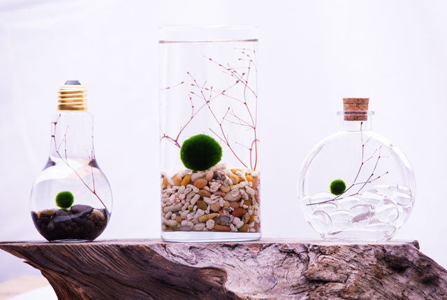 VIEW CUSTOM TERRARIUM KITS