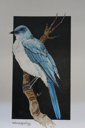 Blue Jay in Gouache and Pen