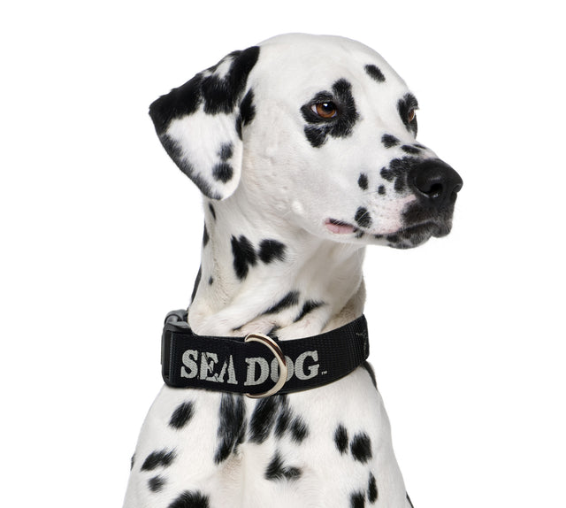 Sea Dog Collar Black