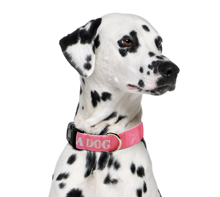 Sea Dog Collar Pink