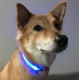 Solar Powered Glow In The Bark™ LED Dog Collar