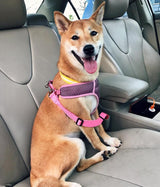 Dog Safety Seat Belt