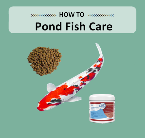 Pond Fish Care - Marquis Gardens