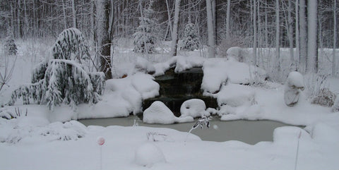pond winterizing, how to survive winter