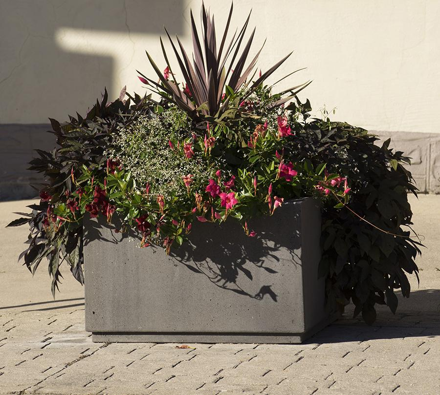 SQ Series Commercial Planters