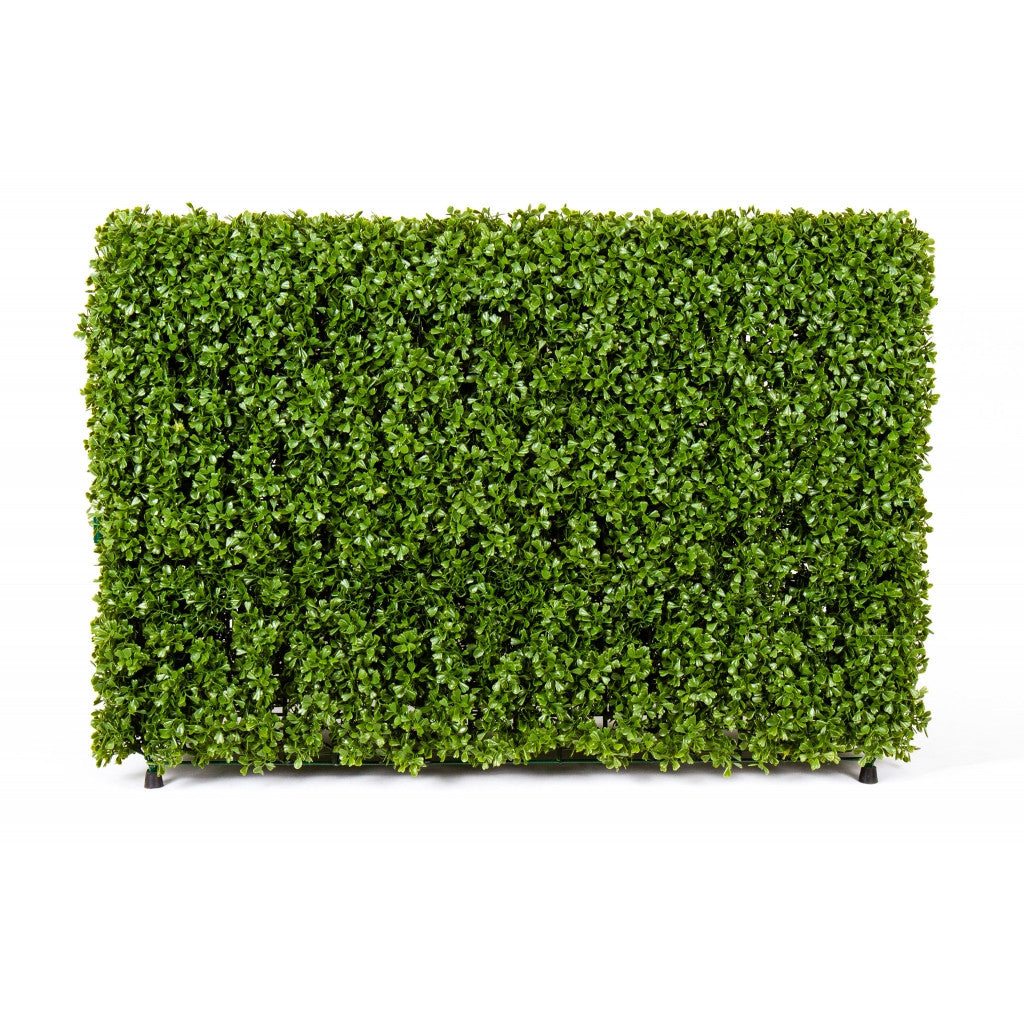 "Photo of Boxwood Hedge, 36"" x 12"" x 24""  - Marquis Gardens"