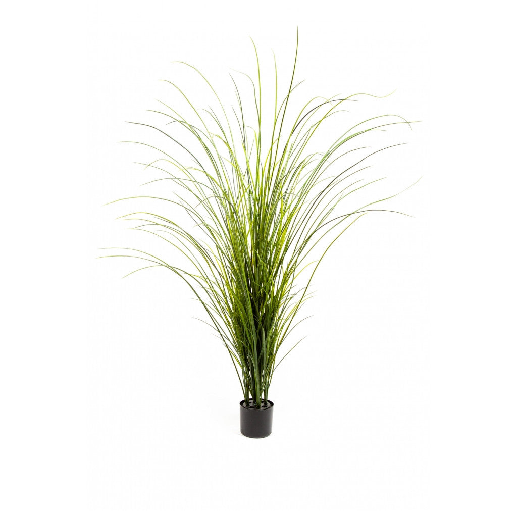 "Photo of Onion Grass, 72""  - Marquis Gardens"