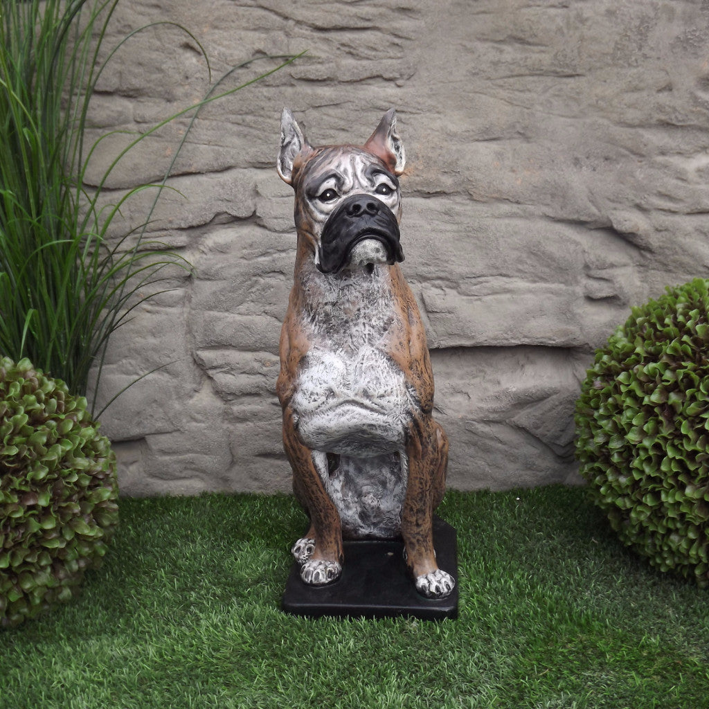 Photo of Boxer Dog  - Marquis Gardens