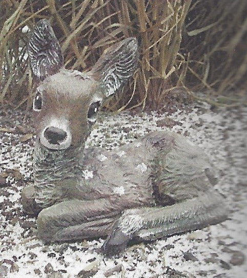 Photo of Deer - Laying Fawn MC  - Marquis Gardens