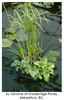 Laguna Floating Plant Baskets