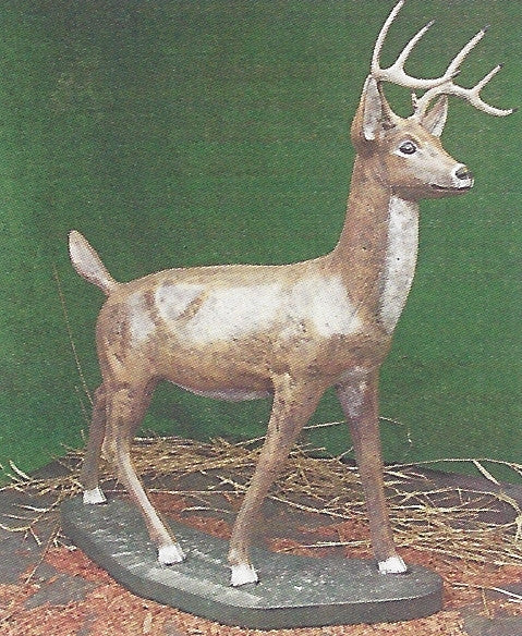 Photo of Large Buck MC  - Marquis Gardens