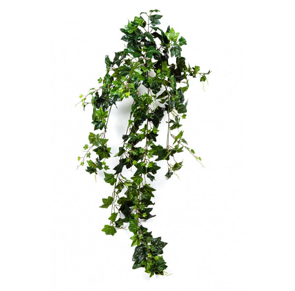 English Ivy Bush Large, 56