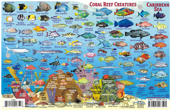 Caribbean Reef Creatures ID Card by Franko