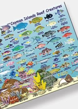 Cayman Islands Fish ID Card & Mini Map by Franko