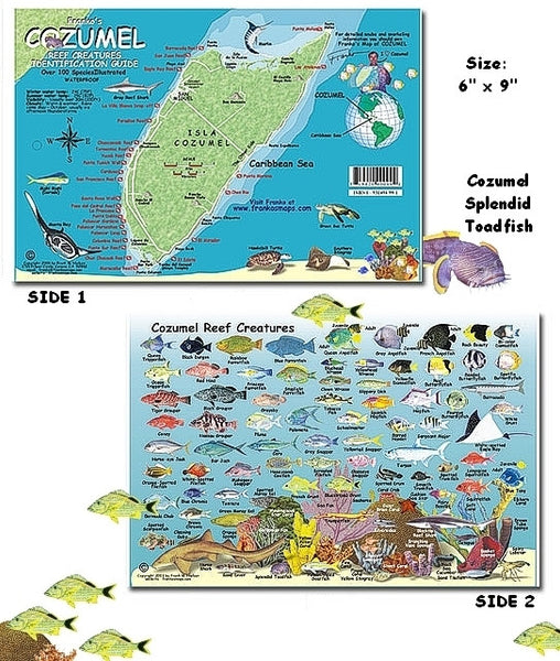 Cozumel Island Fish ID Card & Mini Map by Franko