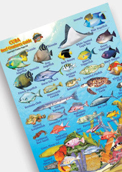 Cuba Reef Creatures Mini Card by Franko