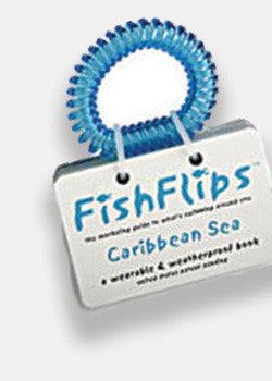 Fish Flips: A Snorkeling Guide