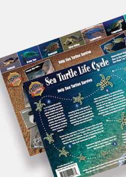 Sea Turtle Lifecycle Creature Guide by Franko