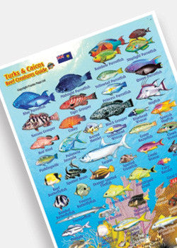 Turks & Caicos Reef Creatures Mini Card by Franko