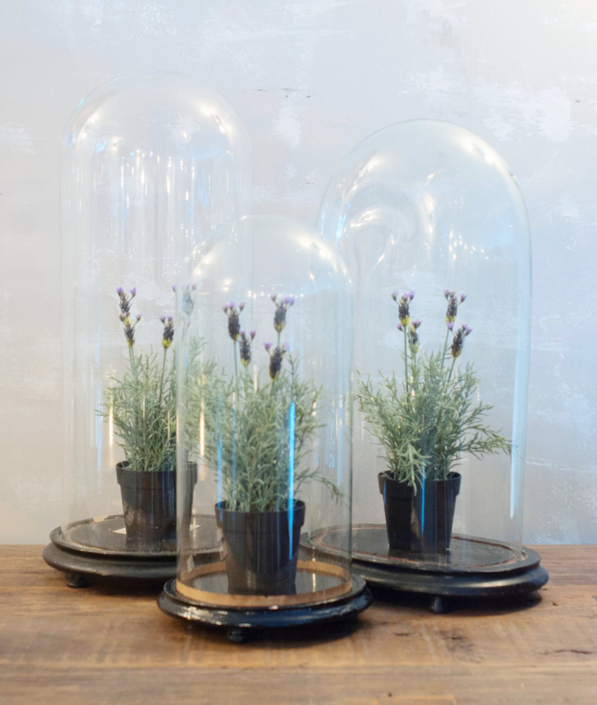 Antique Cloches