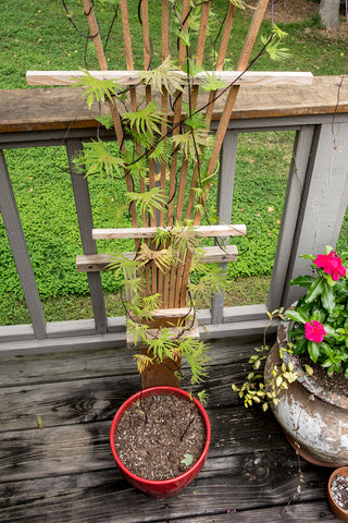 Home made trellis