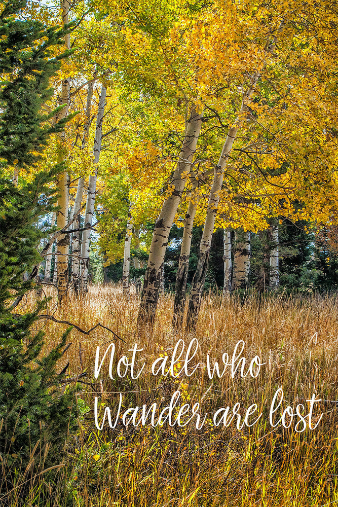 Fall colors of Aspen and cottonwood trees with type message.