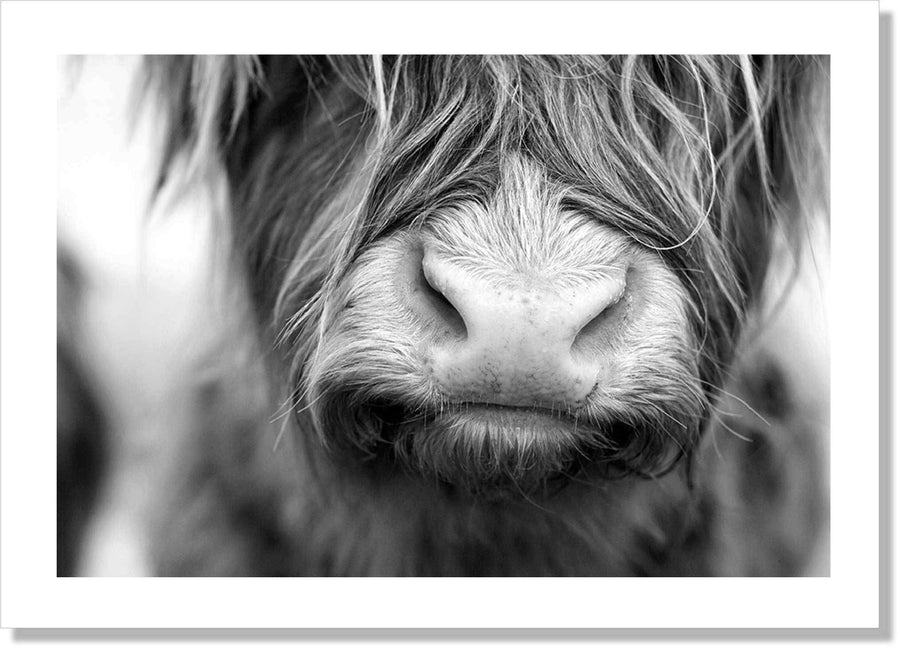 Highland Cow B+W - Simple Style Co