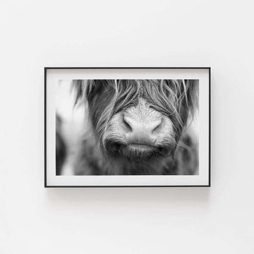 Highland Cow Print | Highlander Cow Print | Animal Prints