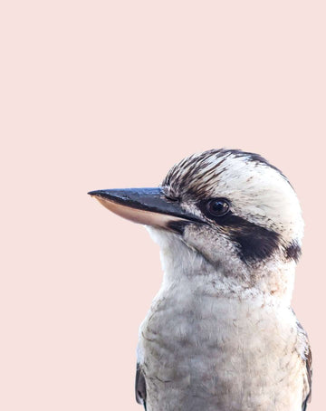 Kyler the Kooka - Simple Style Co