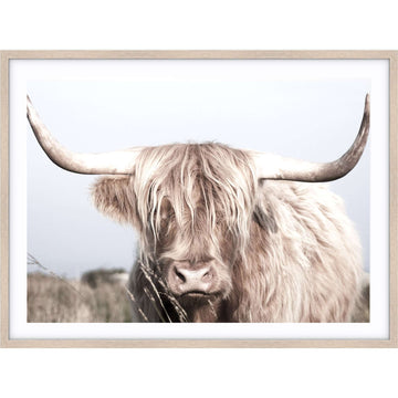 Simple Style Co: Highland Cow II Print | Free Delivery Australia Wide