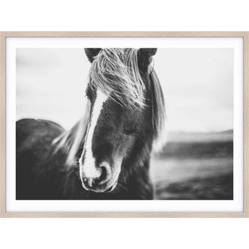 Simple Style Co: Stallion Print | Free Delivery Australia Wide