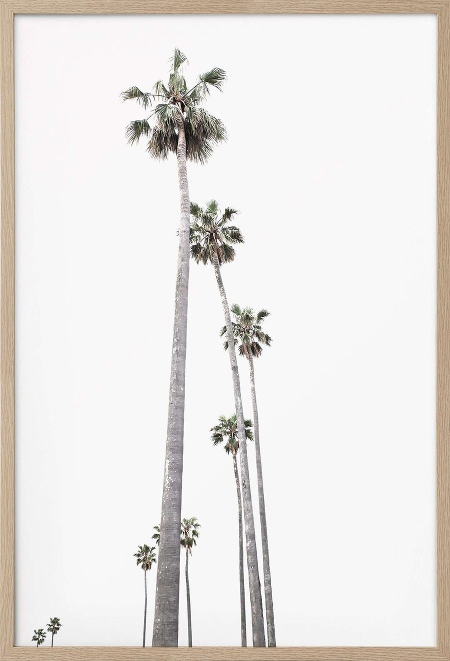 St Kilda Palm Trees - Simple Style Co