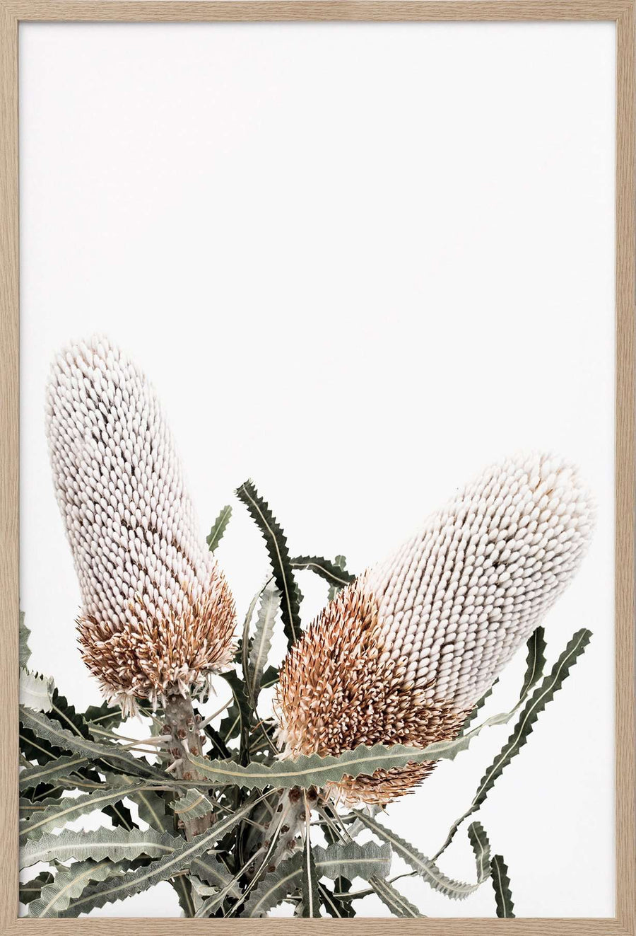 Donna Delaney Prints - White Banksia II | Simple Style Co