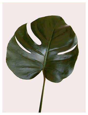 Monstera Leaf Pink