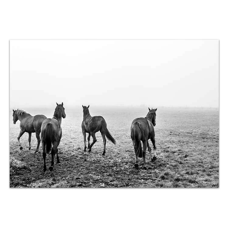 Gallop Print | Love Your Space | Animal Prints | Horse Prints
