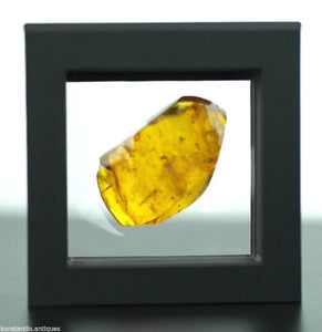 Genuine Baltic Amber stone with Inclusion bugs in the display frame