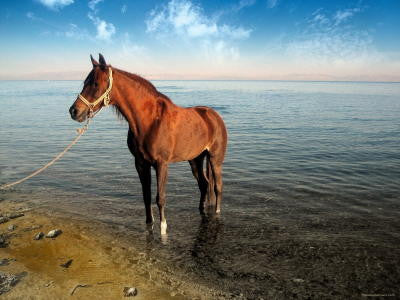 Horse and Sea - Mouse Pad Universe