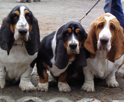 Trio of Basset Hounds - Mouse Pad Universe
