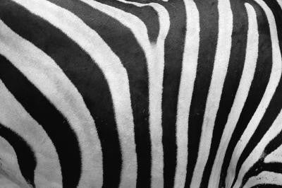 Zebra Stripes - Mouse Pad Universe