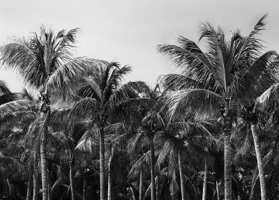 bw Palm Trees - Mouse Pad Universe