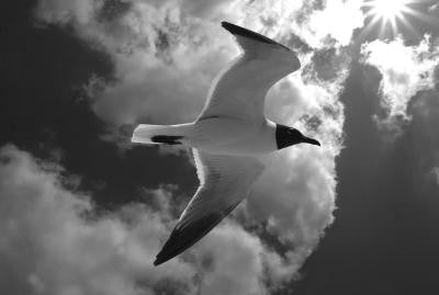 bw Seagull in Clouds - Mouse Pad Universe