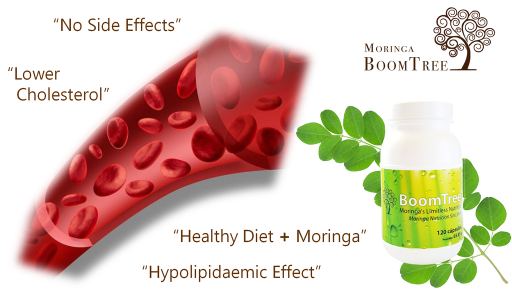 Moringa Can Help Lower Cholesterol Levels